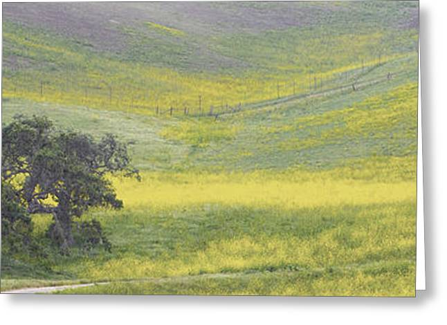 Goldenrod Oak Santa Ynez California 3 Greeting Card by Barbara Snyder