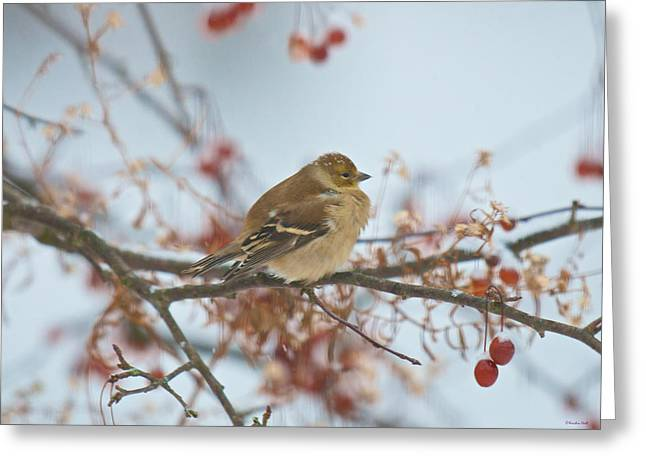 Goldfinch Brrrr Greeting Card