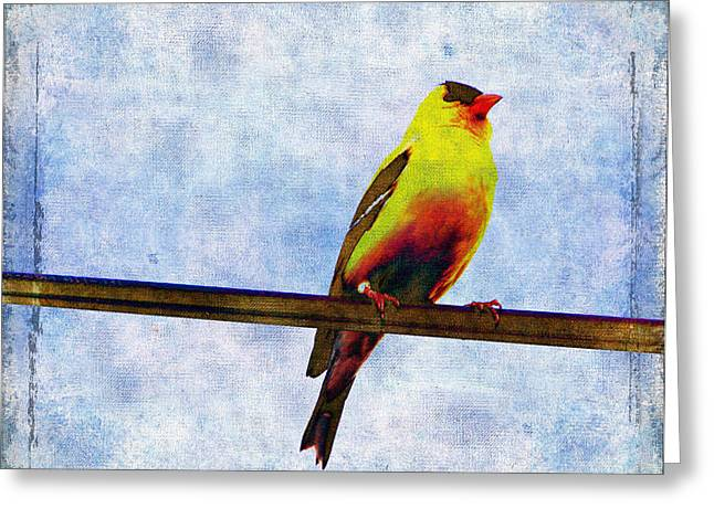 Goldfinch Greeting Card by Cassie Peters