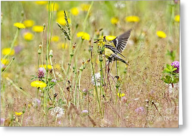 Goldfinch In A Field Of Wildflowers Greeting Card by Sharon Talson