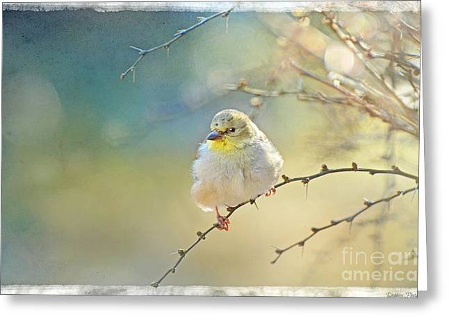 Goldfinch In Golden Light Greeting Card