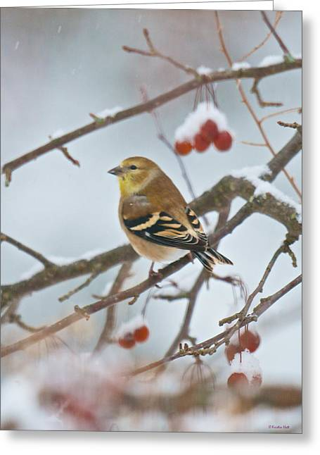 Goldfinch In Snow Greeting Card