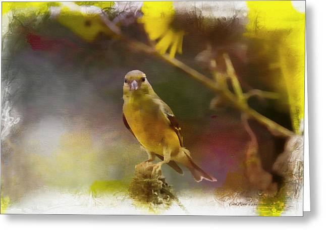 Goldfinch Php Greeting Card