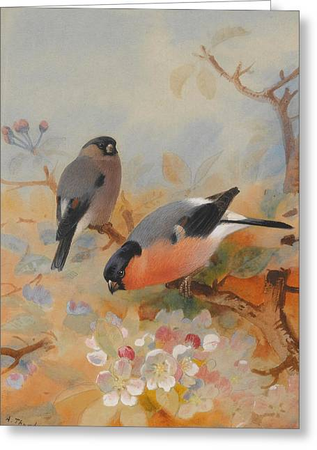 Goldfinches Bullfinches Greeting Card by Archibald Thorburn