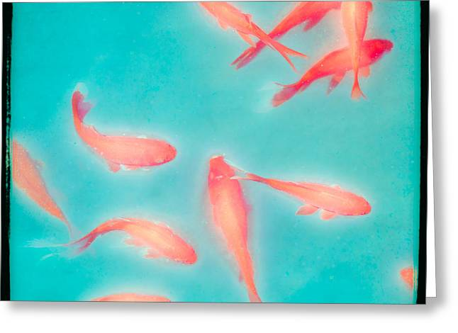 Goldfish - Glowing Fish - Gary Heller Greeting Card by Gary Heller