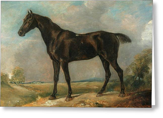 Golding Constables Black Riding-horse, Attributed To John Greeting Card by Litz Collection