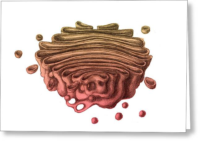 Golgi Apparatus Greeting Card