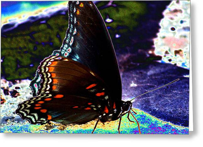 Gona-fly-butterfly Greeting Card