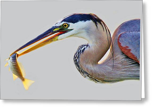 Gone Fishing Greeting Card by Paulette Thomas