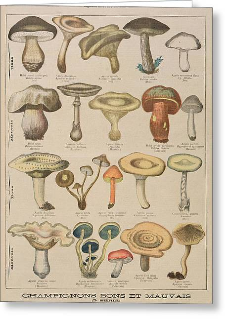 Good And Bad Mushrooms Greeting Card by French School