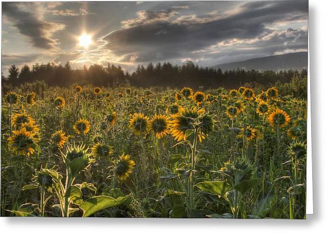 Good Day Sunshine Greeting Card by Lori Deiter