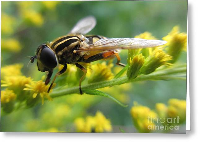 Good Guy Hoverfly  Greeting Card