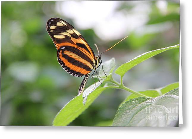 Good Morning Butterfly Greeting Card