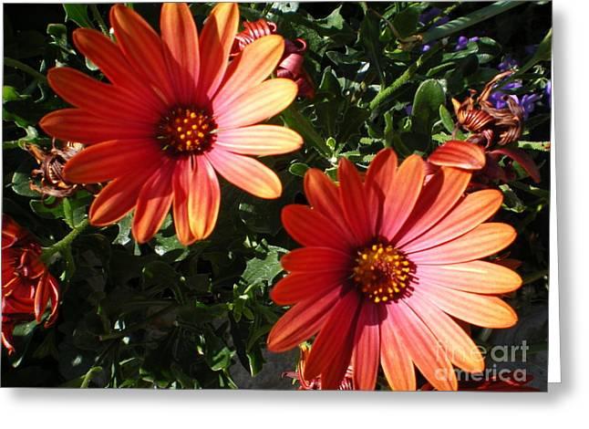 Good Morning Flower. Greeting Card by Ann Fellows