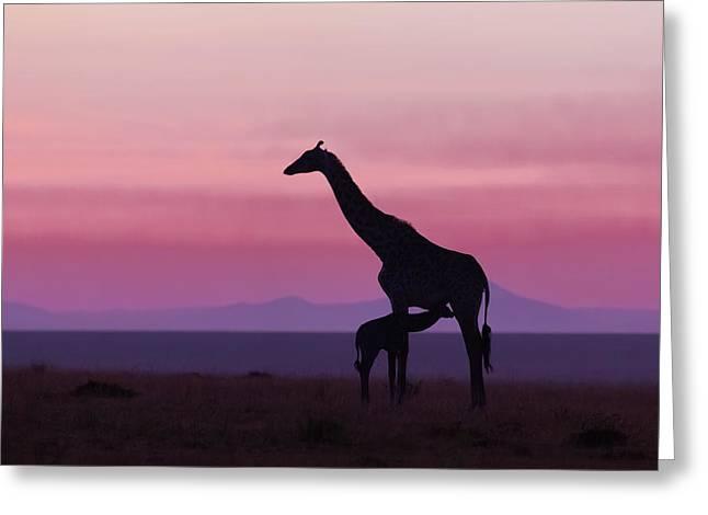 Good Morning Masai Mara 7 Greeting Card