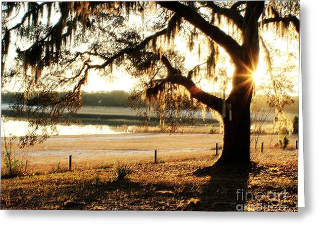Good Morning Mossy Oak Greeting Card