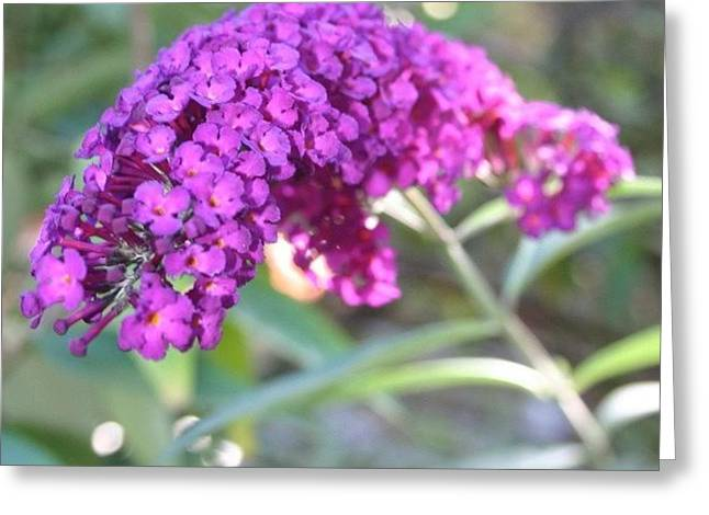 Good Morning Purple Butterfly Bush Greeting Card