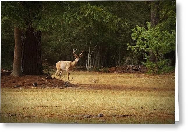 Good Night Deer Greeting Card by Linda Unger