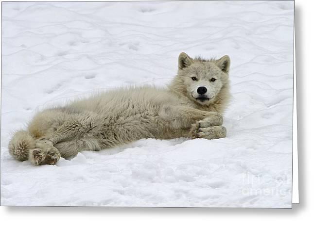 Good Wolfie ... Greeting Card by Nina Stavlund