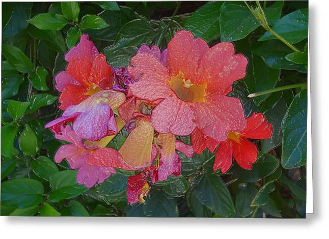 Goodnight With Love And Flowers  Greeting Card by Kenneth James