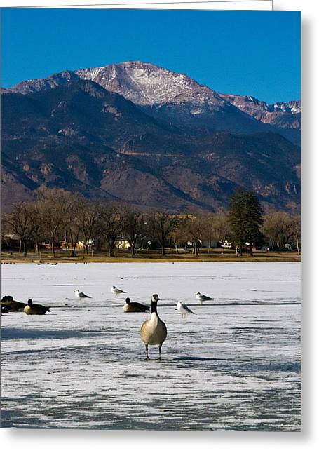 Goose At The Peak Greeting Card by Matt Radcliffe