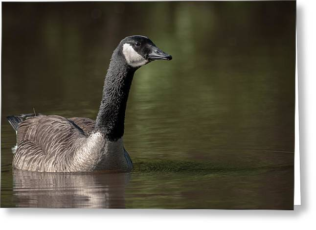 Goose On Pond Greeting Card