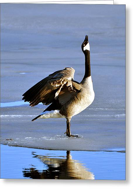 Goose Prayer Greeting Card by RJ Martens