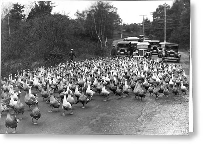 Goose Rush Hour On Rural Road Greeting Card
