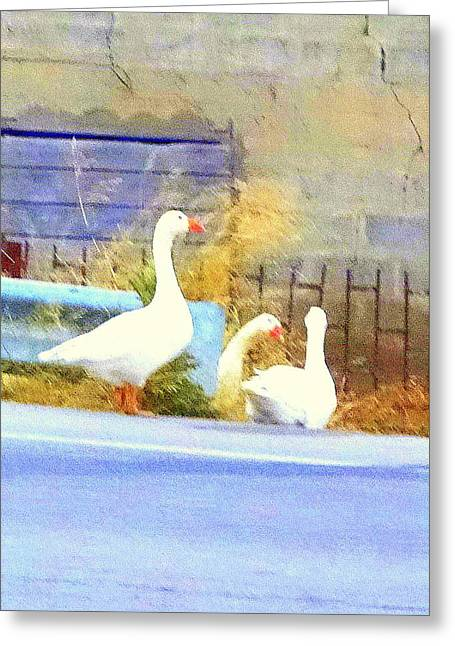 Being The Famous Goose Trio Greeting Card by Hilde Widerberg