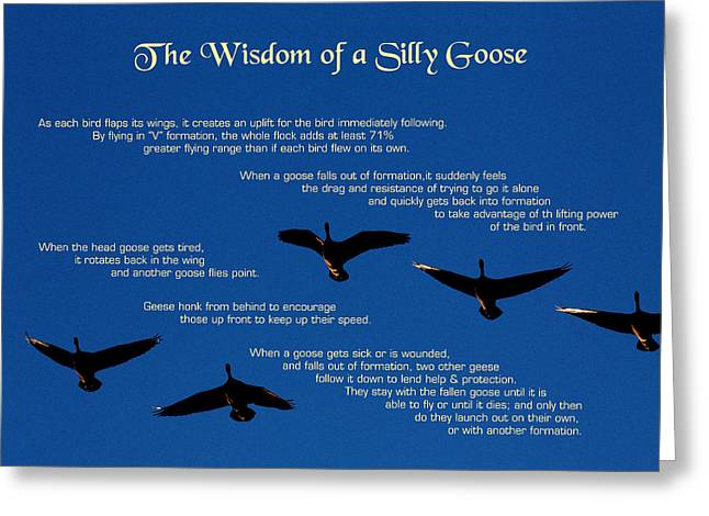 Goose Wisdom Greeting Card by Mike Flynn