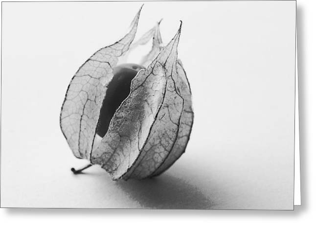 Gooseberry In Black And White Greeting Card