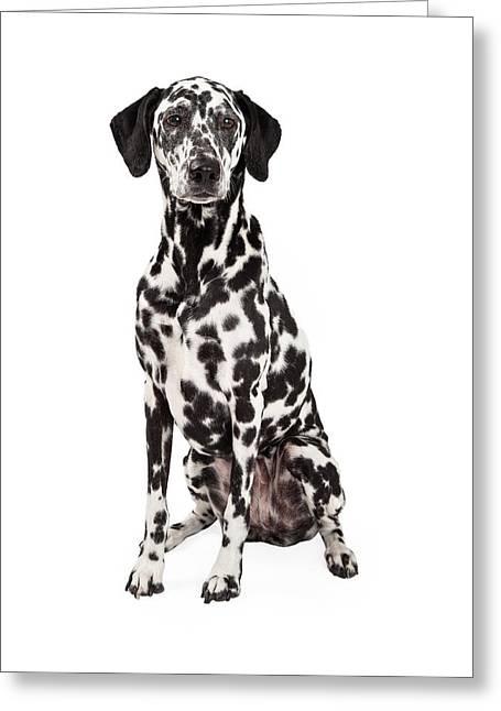 Gorgeous Dalmatian Dog Sitting Greeting Card by Susan Schmitz
