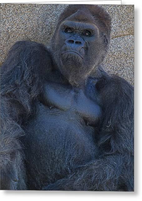 Gorilla  Portrait Greeting Card by Garry Gay