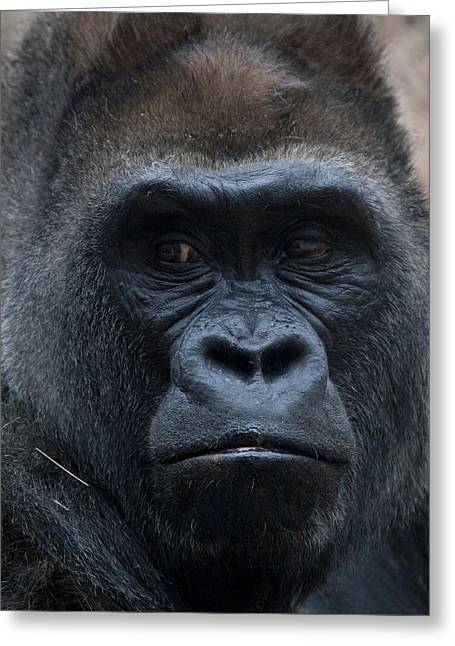 Gorilla Portrait Greeting Card