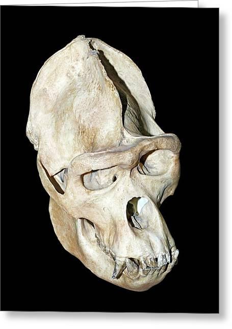 Gorilla Skull Greeting Card by Dirk Wiersma