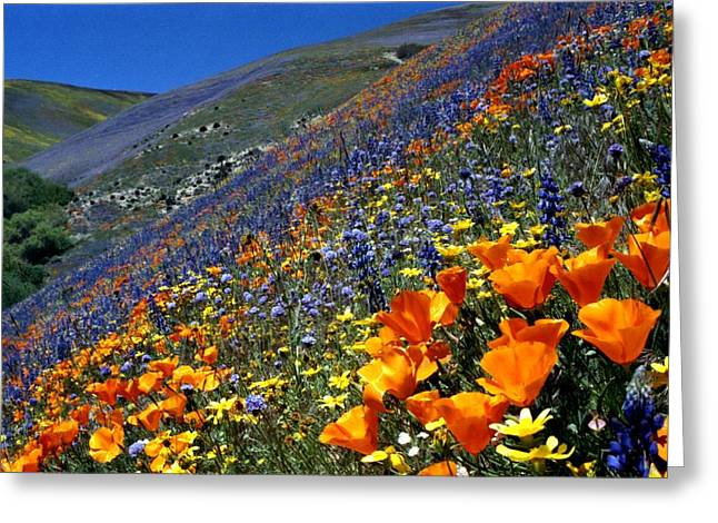 Gorman Flower Field In Full Bloom Greeting Card