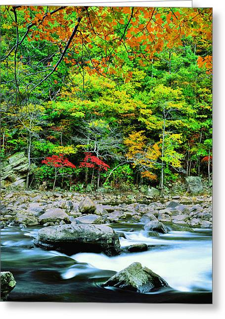 Goshen Pass And Maury River Greeting Card by Bijan Pirnia