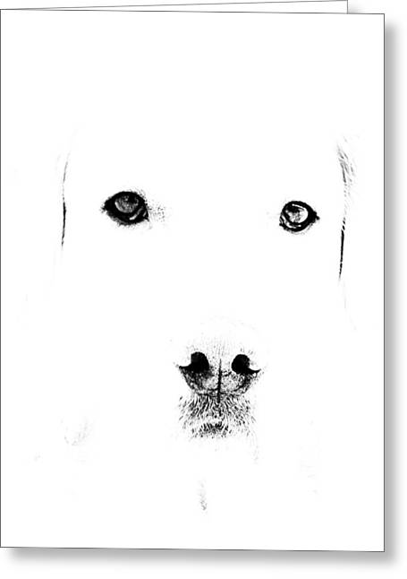 Dog Face Greeting Card