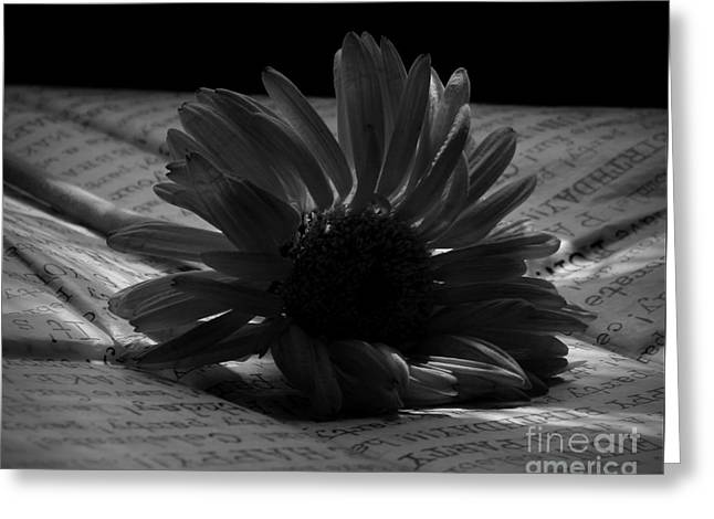 Gothic Birthday Flower Bw Greeting Card by Chalet Roome-Rigdon