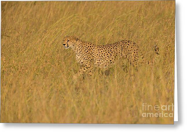 Grace And Elegance Greeting Card by Ashley Vincent