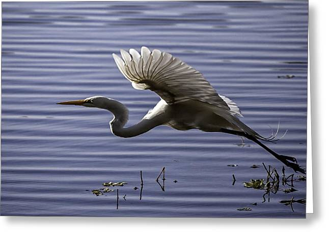 Grace In Motion Greeting Card by Lynn Palmer