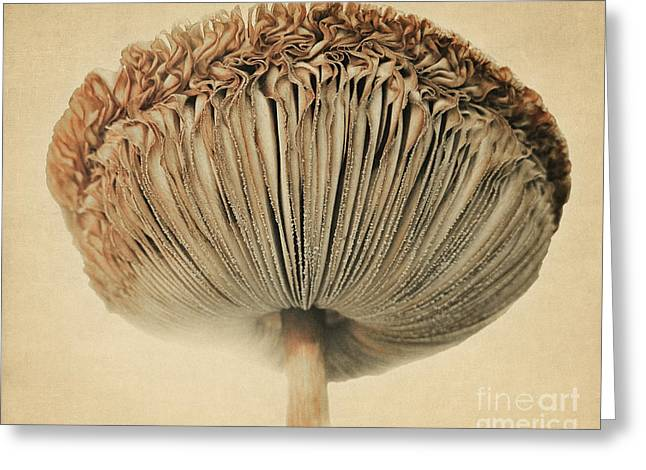 Grace Under Mushroom Greeting Card