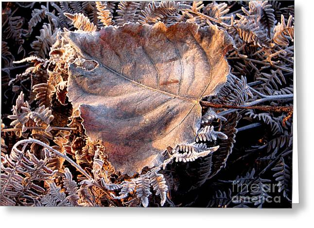 Graced By Frost Greeting Card