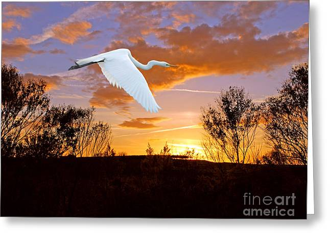 Graceful Fly By Greeting Card by Adele Moscaritolo