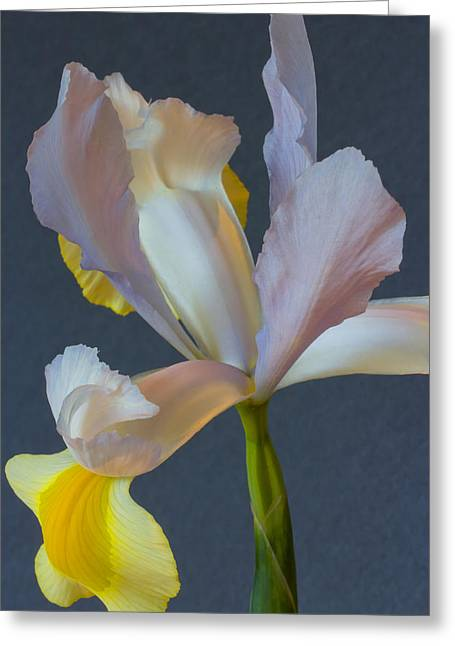 Graceful Greeting Card by Heidi Smith