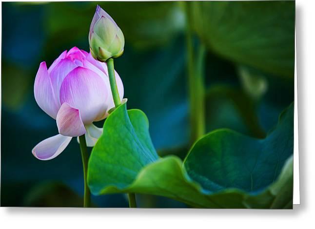 Graceful Lotus. Pamplemousses Botanical Garden. Mauritius Greeting Card