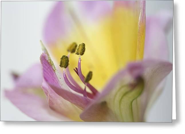 Graceful Stamen  Greeting Card by Carolyn Reinhart