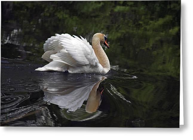 Graceful Swan Greeting Card by Elsa Marie Santoro
