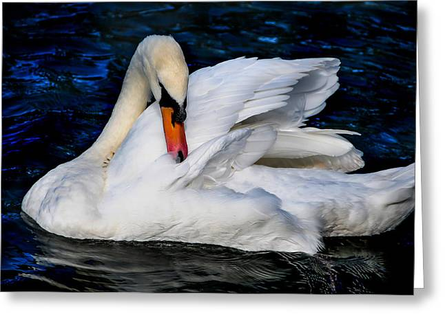 Graceful Swan In The Blue Water Greeting Card by Jenny Rainbow