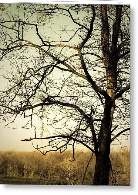 Graceful Tree Greeting Card by Cara Moulds